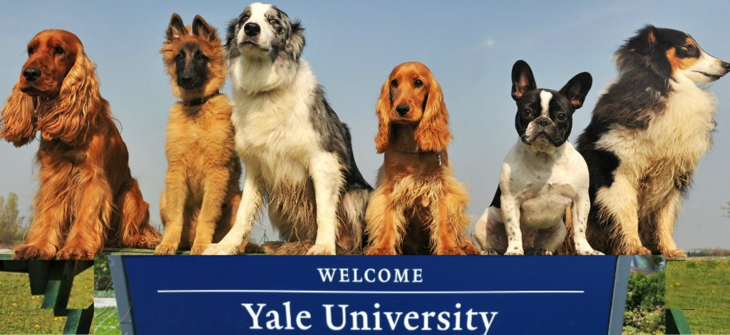 Dogs at Yale